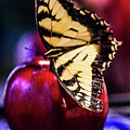 Butterfly On Apple by Gerald Kloss