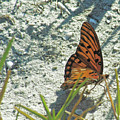 Butterfly On Beach by Jonathan Hill
