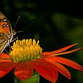 Butterfly On Blossom by Rikk Flohr