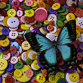 Butterfly On Buttons by Garry Gay