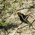 Butterfly On Cracked Ground by Suzanne Leonard