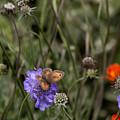 Butterfly On Flower. by Les OGorman
