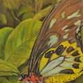 Butterfly On Leaves by Sandra Reeves