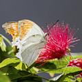 Butterfly On Magenta Flower by Bob Slitzan