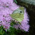 Butterfly On Mauve Flowers by Jean Bernard Roussilhe