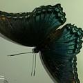 Butterfly On My Car by Maxine Billings