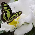 Butterfly On Orchid by MTBobbins Photography