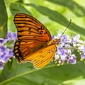 Butterfly On Purple by Craig David Morrison
