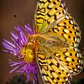 Butterfly On Spent Purple Blossom by Rikk Flohr