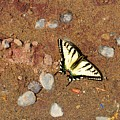 Butterfly On The Beach by Lyle Crump