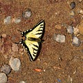 Butterfly On The Sand Two  by Lyle Crump