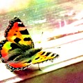 Butterfly On The Window Frame Watercolor by Lenka Rottova