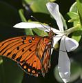 Butterfly On White by Karen Rose Warner