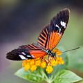 Butterfly On Yellow Flowers by Bob Slitzan