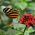 Butterfly Orange And Yellow by Jann Denlinger