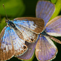 Butterfly Pair by Diane Macdonald