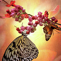 Butterfly Pair by Susan Rissi Tregoning