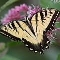 Butterfly Paradise  by Pamela Smith