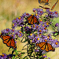 Butterfly Party by Diane E Berry