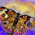 Butterfly by Mia Hansen