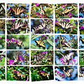 Butterfly Plethora I by Gary Adkins