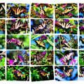 Butterfly Plethora II by Gary Adkins