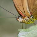 Butterfly Portrait by Ken Czworka