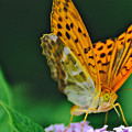 Butterfly Pose by Photos  By Zulma