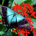 Butterfly by Ray Shiu