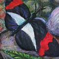 Butterfly Resting by Emily Michaud