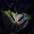 Butterfly Rws Work Number Two by David Lee Thompson