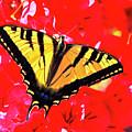 Butterfly Series #11 by Edita De Lima
