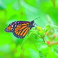 Butterfly Series #13 by Edita De Lima