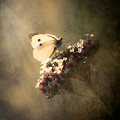 Butterfly Spirit #01 by Loriental Photography