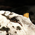 Butterfly Standing On Rock by Goce Risteski