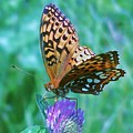 Butterfly Stare by Emily Michaud