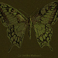 Butterfly Swallow Tail by R Muirhead Art