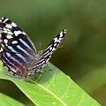 Butterfly by Teresa Zieba