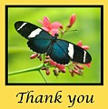 Butterfly Thank You Card by Michael Peychich