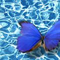 Butterfly by Tony Cordoza
