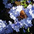 Butterfly Vi by Edward Wolverton