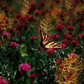 Butterfly by Vicki Lea Eggen