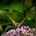 Butterfly Victory by Bill Swartwout Fine Art Photography