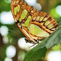 Butterfly Watching by Smilin Eyes  Treasures