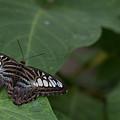 Butterfly by Wesley Farnsworth
