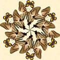 Butterfly Wheel Dance by Melissa A Benson