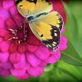 Butterfly Whispers by Karen Adams