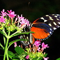 Butterfly With Pink Flowers by Beth Akerman