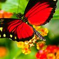 Butterfly1 by Amy Carroll