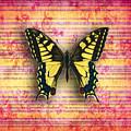 Butterfly1 by Ramneek Narang